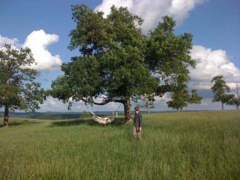 hammock tree